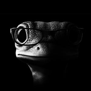 The Gecko headshot