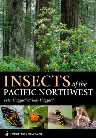 Book Cover for: Insects of the Pacific Northwest