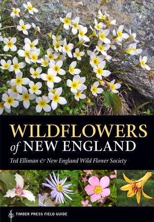 Book Cover for: Wildflowers of New England