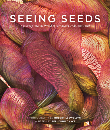 Book Cover for: Seeing Seeds