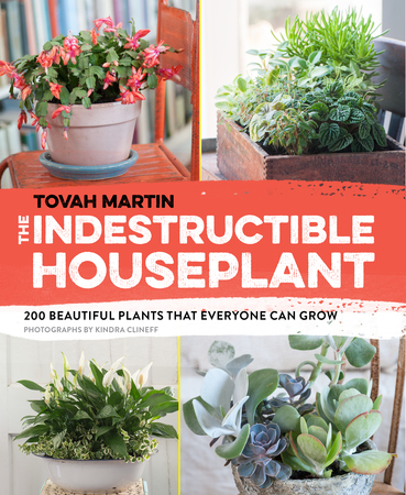 Book Cover for: The Indestructible Houseplant