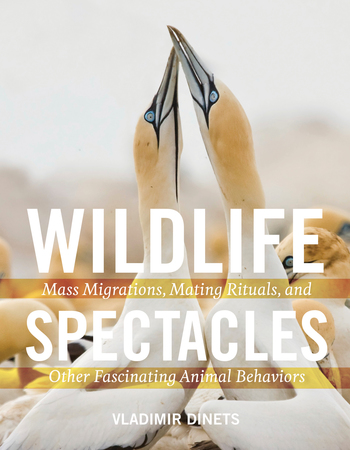 Book Cover for: Wildlife Spectacles