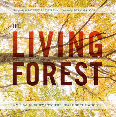 Book Cover for: The Living Forest