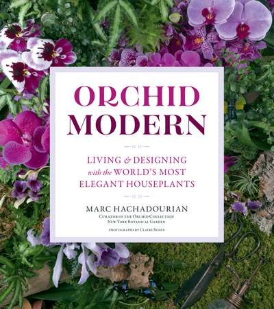 Book Cover for: Orchid Modern