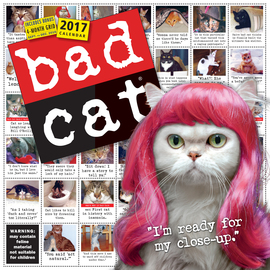 Bad Cat Wall Calendar 2017 - cover