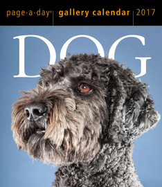 Dog Page-A-Day Gallery Calendar 2017 - cover