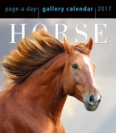 Horse Page-A-Day Gallery Calendar 2017 - cover