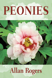 Peonies - cover
