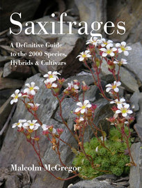 Saxifrages - cover