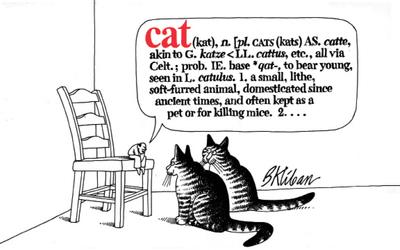Cat - cover