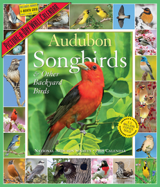 Audubon Songbirds and Other Backyard Birds Picture-A-Day Calendar 2018 - cover