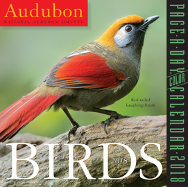 Audubon Birds Page-A-Day Calendar 2018 - cover
