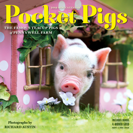 Pocket Pigs Mini Wall Calendar 2019 - cover