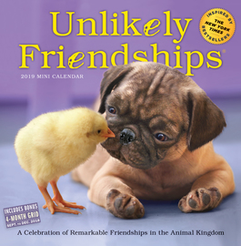Unlikely Friendships Mini Wall Calendar 2019 - cover