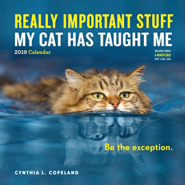 Really Important Stuff My Cat Has Taught Me Wall Calendar 2019 - cover