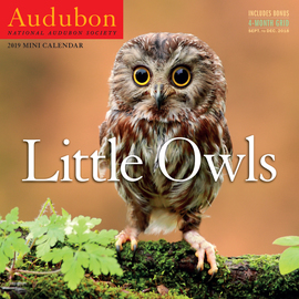 Audubon Little Owls Mini Wall Calendar 2019 - cover