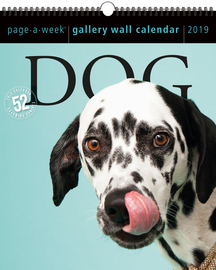 Dog Page-A-Week Gallery Wall Calendar 2019 - cover