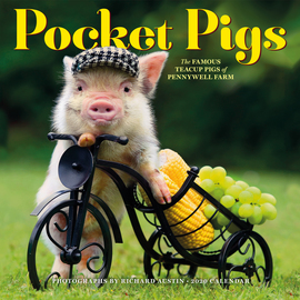 Pocket Pigs Wall Calendar 2020 - cover