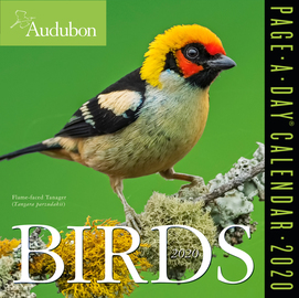 Audubon Birds Page-A-Day Calendar 2020 - cover