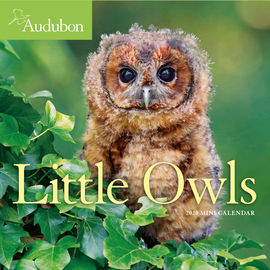 Audubon Little Owls Mini Wall Calendar 2020 - cover