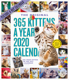365 Kittens-A-Year Picture-A-Day Wall Calendar 2020 - cover