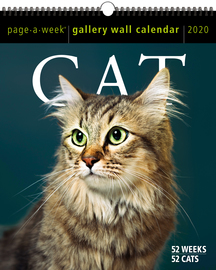 Cat Page-A-Week Gallery Wall Calendar 2020 - cover