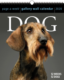 Dog Page-A-Week Gallery Wall Calendar 2020 - cover