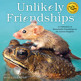 Unlikely Friendships Mini Wall Calendar 2020 - cover