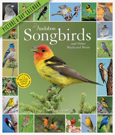 Audubon Songbirds and Other Backyard Birds Picture-A-Day Wall Calendar 2021 - cover