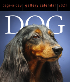 Dog Page-A-Day Gallery Calendar 2021 - cover