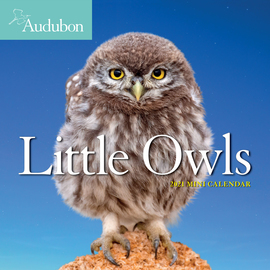 Audubon Little Owls Mini Wall Calendar 2021 - cover