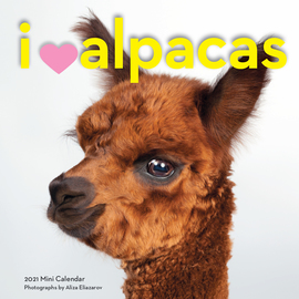 I Heart Alpacas Mini Wall Calendar 2021 - cover