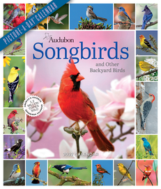 Audubon Songbirds and Other Backyard Birds Picture-A-Day Wall Calendar 2022 - cover