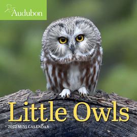Audubon Little Owls Mini Wall Calendar 2022 - cover