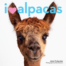 I Heart Alpacas Wall Calendar 2022 - cover