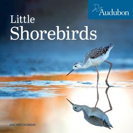 Audubon Little Shorebirds Mini Wall Calendar 2022 - cover