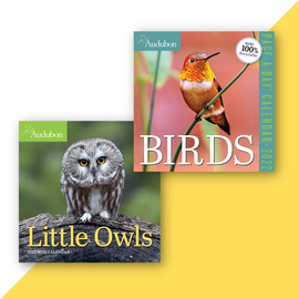 National Audubon Society Bird Calendar Collection - cover