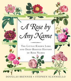 A Rose by Any Name - cover