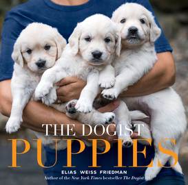The Dogist Puppies - cover