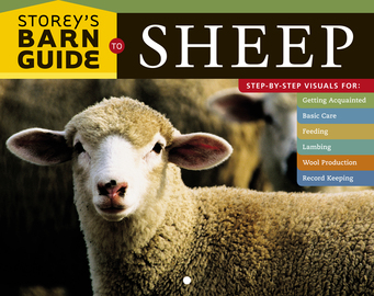 Storey's Barn Guide to Sheep - cover