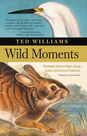 Wild Moments - cover