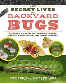 The Secret Lives of Backyard Bugs - cover