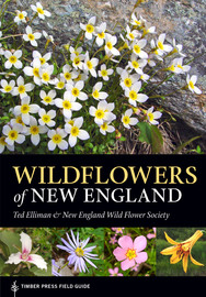 Wildflowers of New England - cover
