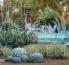 The Bold Dry Garden - cover