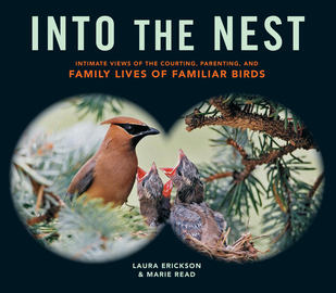 Into the Nest - cover