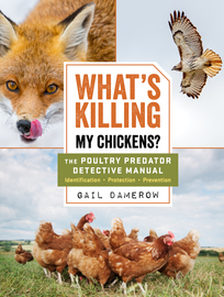 What's Killing My Chickens? - cover
