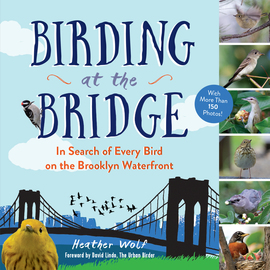 Birding at the Bridge - cover