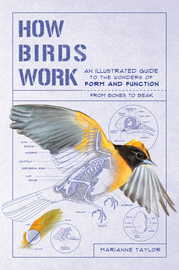 How Birds Work - cover
