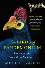 The Birds of Pandemonium - cover
