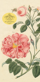 John Derian Paper Goods: Everything Roses Notepad - cover